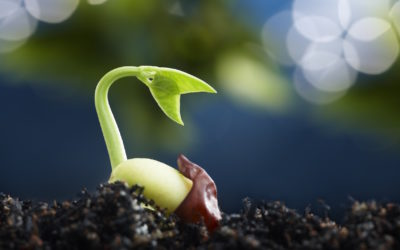 2017- The best year to sow the seeds for your future